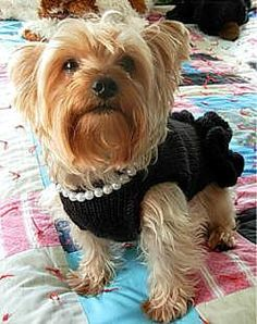 Dog Little Black Dress with Pearls. Free knit PDF download | My Savannah Cottage: Scroll down page for pattern link