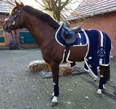 Eskadron Heritage Just Blue❤ #eskadronoutfits #eskadron #heritage #equestrian #equestrianlife #horses