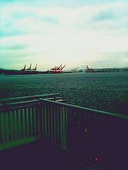 cranes: Home is: the Puget Sound