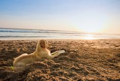 Playtime at the beach? REPIN if this is your pet's paradise!