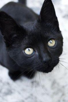 black cat love