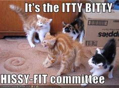 It's the ITTY BITTY  HISSY-FIT committee