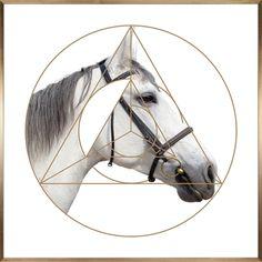 优雅,白马,动物,古典,艺术,晶瓷,装饰,挂画 Elegant,White,Horse,Animal,Copperplate,Etching,Crystal,Porcelain,Decorate,Painting