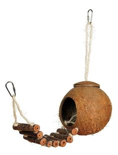 Naturals Coco Hideaway With Ladder - Spoiled Pet Cafe Pet Cafe, Wood Bird, Coconut Shell, Bird Toys, Cockatiel, Parakeet, Toy Sale, Bird Cage, Decorative Bells