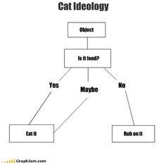 Cat Ideology.