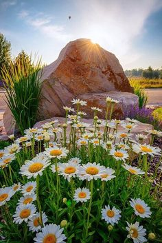 Welcome to the community of fans Pictures nature Beautiful World, Beautiful Gardens, Beautiful Flowers, Beautiful Places, Beautiful Pictures, Landscape Photography, Nature Photography, Image Nature, Daisy Love