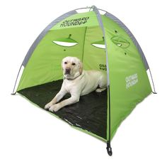 Dogs Gone Camping: 6 Must Have Dog Items To Take Camping    ---  from InventorSpot.com --- for the coolest new products and wackiest inventions.