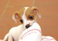 Image result for puppys
