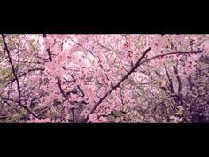 Rooh [Trailer]