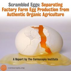 Scrambled Eggs: Separating Factory Farm Egg Production From Authentic Organic Agriculture. More Here: http://www.cornucopia.org/2010/09/organic-egg-report-and-scorecard