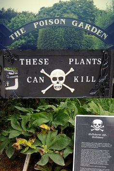 In the shadow of one of Ireland's most famous attractions lies a fascinating garden of toxic plants. BE CAREFUL! These plants WILL kill you! #InspiringTravellers: http://inspiringtravellers.com/poison-garden-blarney-ireland/