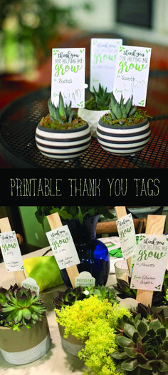 Super cute printable gift cards for potted plants, cactus, jar terrarium. Teacher gifts. End of year gifts. Etsy affiliate