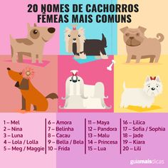 20 nomes de cachorros fêmeas