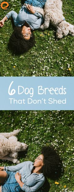 Don't want your new home covered in dog hair? There are plenty of dog breeds that don't shed, leaving your new abode clean and fur-free.