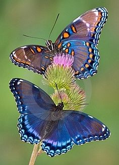 Butterflies are so gorgeous.