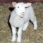 Welcome to All-Creatures.org We are dedicated to cruelty-free living through a vegetarian - vegan lifestyle according to Judeo-Christian ethics. Lamb of God