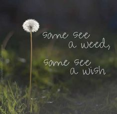 My parents used to always tell me they were just weeds, and not to blow them around cause more will grow....but to me it was a chance to make a wish.