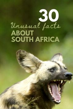 Marvel at these unusual facts about our beautiful country. South Africa has made history in a number of fields and is home to some pretty spectacular natural wonders that can be explored! Unusual Facts, Interesting Facts, Countries Around The World, Around The Worlds, South Africa Facts, Going On Holiday, Natural Wonders, Where To Go, Fields