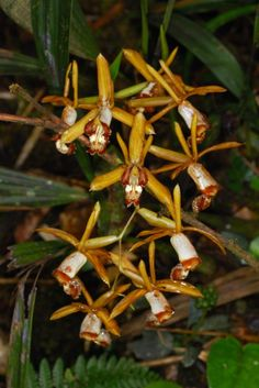 Orchid Species Photographs