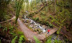 Discover Forest Park's Lesser-Known Trails | Travel Oregon