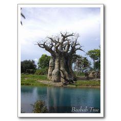 Baobab Tree - Africa and Australia