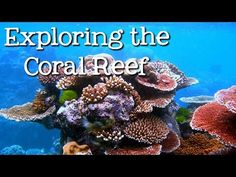 Discover More: Ocean Science for Kids - Green Kid Crafts | Official Site