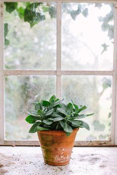 The Advantages Of Growing Food Indoors With Hydroponic Gardening Hydroponic Gardening, Hydroponics, Organic Gardening, Indoor Gardening, Indoor Plants, Garden Windows, Balcony Garden, Organic Vegetables, Growing Vegetables
