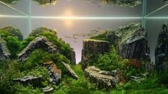 Small-Fish-Coral-Reef-Water-Plants-Stunning-Layout-915x516.jpg