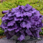 "Flower Garden Ten Positively ""Purple"" Plants You'll Love Purple Plants, Purple Garden, Shade Plants, Shade Garden, Colorful Flowers, Purple Flowers, Beautiful Flowers, White Flowers, Front Yard Landscaping"