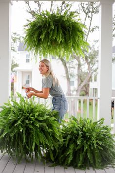 how to get big healthy ferns - Holy City Chic Fern Planters, Potted Ferns, Indoor Ferns, Hanging Ferns, Hanging Plants Outdoor, Hanging Flower Baskets, Front Porch Plants, Summer Front Porches, Front Porch Landscape