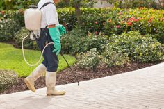 Get cheap pest control Bristol from a local pest controller. For emergency pest control quote, cost or prices call our pest removal exterminators in Bristol