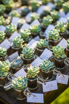 Statement succulents: http://www.weddingandweddingflowers.co.uk/article/1431/five-gorgeous-ideas-for-your-2015-wedding 2015 wedding trends
