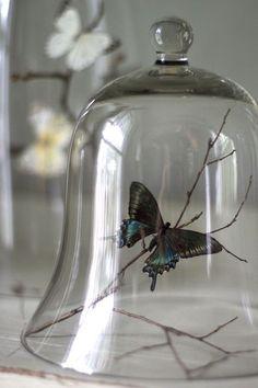 Mariposas atrapadas