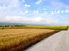 El Camino en Navarra