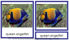 Vertebrates - Fish; Printable Montessori Animal and Science Materials for Montessori Learning at home and school.