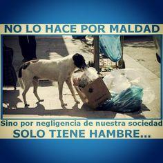 """By @perritocallejer """"No lo hacemos por #maldad si no por hambre. Alimentar un callejerito NO resuelve su abandono, pero hace su día menos cruel"""" #AllTerrainPeopleVenezuela #perrocallejero #dog #doglover #perro #street #instadog #mascotas #cute #streetdog #calle #perros #can #callejero #venezuela #adoptaunperro #ternura #quiltro #straydog #perrodelacalle #dogs #animal #adoptanocompres #conciencia #noalmaltratoanimal"""