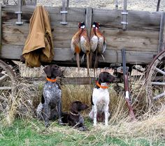 hunting dogs!