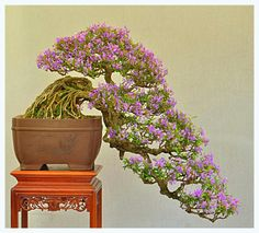 Cascading Bonsai Tree BONSAI TREES : More At FOSTERGINGER @ Pinterest