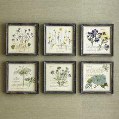 Birch Lane Pressed Flowers Wall Art