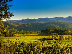 Visit the region& best wineries on a road trip through Northern California& wine country in Napa Valley and Sonoma. California Travel, Northern California, California Wine, Sonoma California, California Getaways, Valley California, Napa Valley, Sonoma Valley, Valley Road