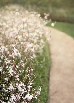 A Gaura Path by Angie.W.