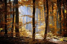 forest autumn foliage trees leaves orange yellow light nature wallpaper background