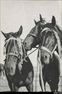 Threefaithful members of the Australian Light Horse. The photograph is from an album of photographs taken in Egypt and the Middle East by an unknown South Australian member of the Australian Light Horse.