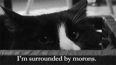Www Cat A Cat Com Funny Gif #2010 - Funny Cat Gifs|Funny Gifs|Cat Gifs