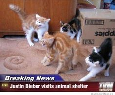 halloween jokes funny | Funny Halloween: Breaking News Animals Edition | Funny Pinoy Jokes ...