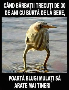 We are aiming to entertain you with random funny pictures of this kind. Here are 23 funny pictures of the funny day you're entitled to Funny Animal Memes, Funny Animal Pictures, Funny Photos, Funny Animals, Funny Jokes, Hilarious, Frases Humor, Funny Memes About Girls, Humor Grafico
