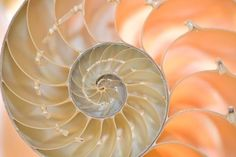 seashell The lines on the seashell are mostly curved around the center.