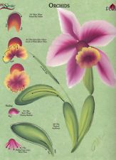 Donna+Dewberry+Free+Patterns+Orchid | orchids rtg worksheet 4 binder donna dewberry donna dewberry one