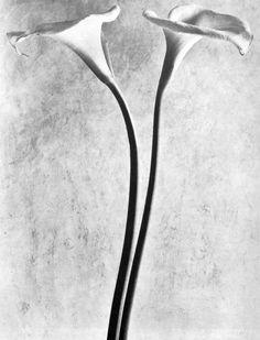 Tina Modotti - Calle, 1927