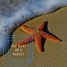 One of our most popular styles is the starfish. But did you know how amazing starfish actually are? Here are our favourite fun facts on starfish for you to enjoy. Seres Gifts for luxury sterling silver starfish jewellery. Starfish Story, Beach Mirror, Beach Color Palettes, Mirrors For Makeup, Fernandina Beach, Beach Bathrooms, Beach Kids, Sand Beach, Starfish